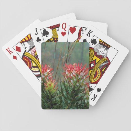 Common Mimetes (Mimetes Cucullatus) Poker Cards