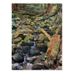 Common Minnesota rock bed stream from the Forest Post Card