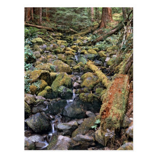Common Minnesota rock bed stream from the Forest Postcard