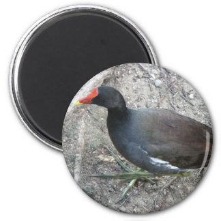 Common Moorhen 2 Inch Round Magnet