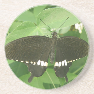 Common Mormon Butterfly Coasters