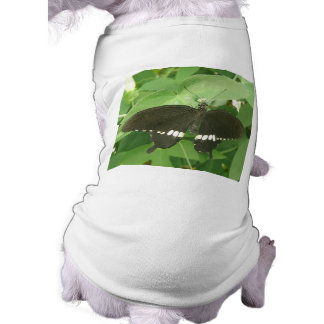 Common Mormon Butterfly Dog T Shirt