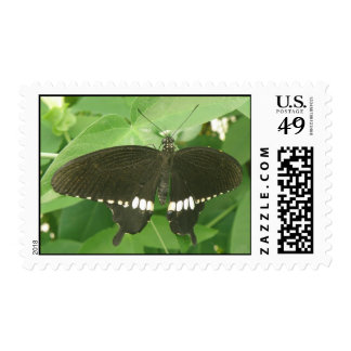 Common Mormon Butterfly Postage Stamp