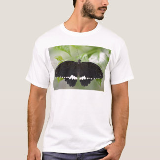 Common mormon butterfly T-Shirt