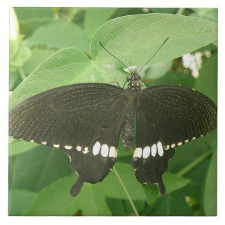 Common Mormon Butterfly Tile