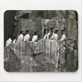 Common Murres, Castle Rock, Shumagin Islands Mouse Pad