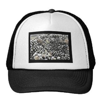 Common Murres Trucker Hat