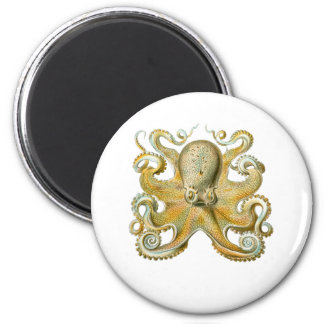 Common Octopus 2 Inch Round Magnet