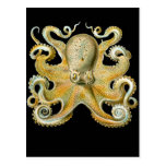 Common Octopus Post Cards