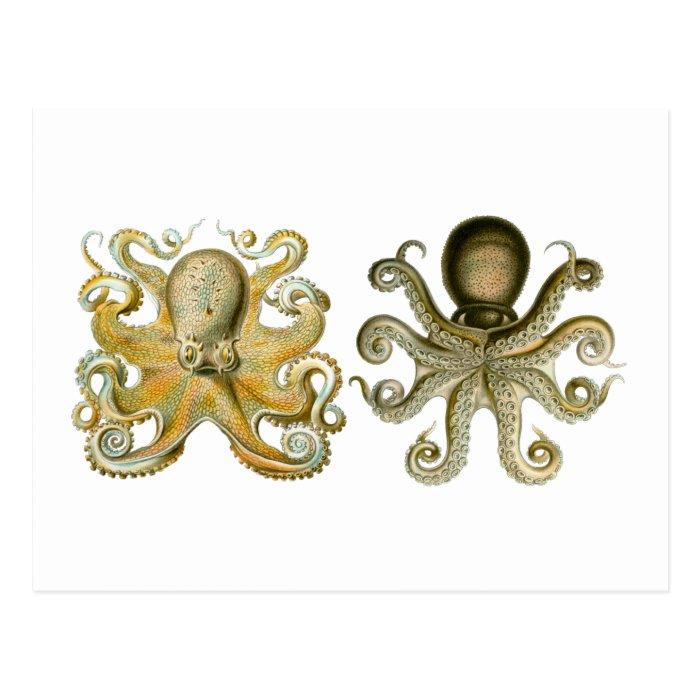 Common Octopus Postcard
