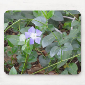 Common Periwinkle, Vinca Minor, on Roadside Mouse Pad