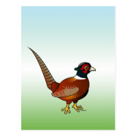 Common Pheasant Postcard