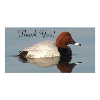 Common Pochard Beautifully Reflected In The Water Card