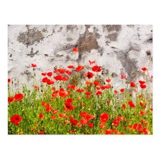 Common poppies postcard