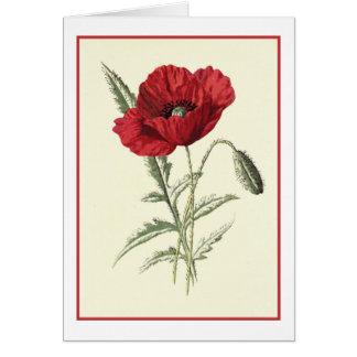 """Common Poppy"" Botanical Illustration Greeting Card"