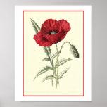 """""""Common Poppy"""" Botanical Illustration Poster"""