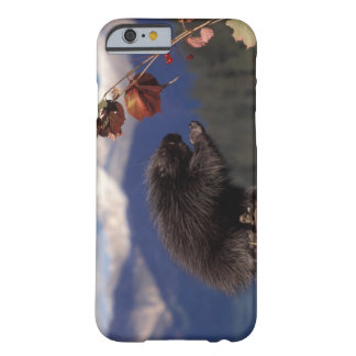 Common porcupine eating Alaskan high brush Barely There iPhone 6 Case