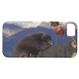 Common porcupine eating Alaskan high brush iPhone SE/5/5s Case