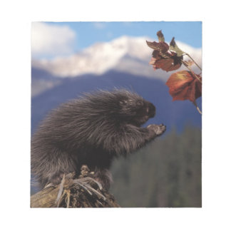 Common porcupine eating Alaskan high brush Notepad