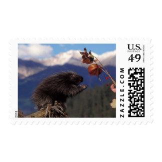 Common porcupine eating Alaskan high brush Stamp