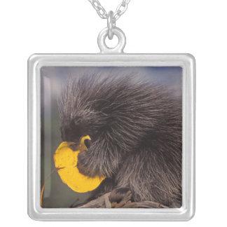 common porcupine, Erethizon dorsatum, baby Silver Plated Necklace