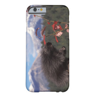 Common porcupine feeding on high brush cranberry barely there iPhone 6 case