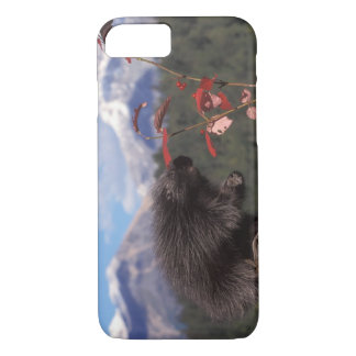 Common porcupine feeding on high brush cranberry iPhone 7 case