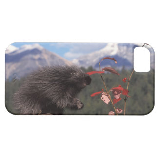 Common porcupine feeding on high brush cranberry iPhone SE/5/5s case