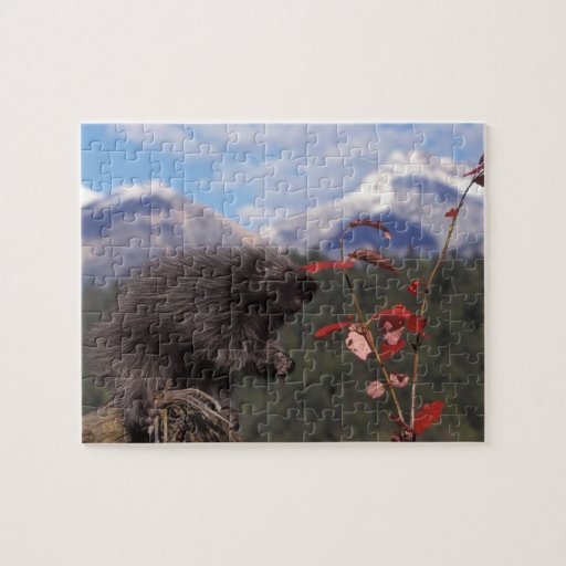 Common porcupine feeding on high brush cranberry jigsaw puzzles