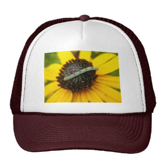 Common Pug Moth Caterpillar Coordinating Items Trucker Hat