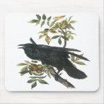 Common Raven, John audubon Mouse Pad