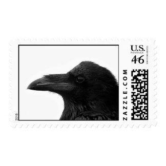 Common Raven Stamp