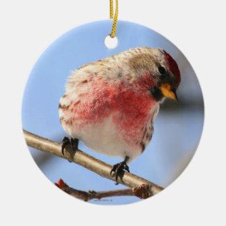Common Redpoll Bird Ornament
