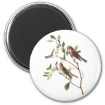 Common Redpoll by Audubon 2 Inch Round Magnet