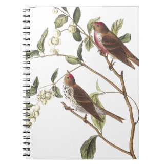 Common Redpoll Note Book