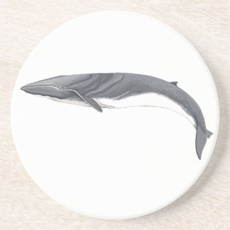 Common Rorcual - aim whale puts glasses Drink Coaster