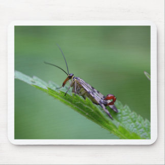 Common Scorpion Fly (Panorpa communis) Mouse Pad