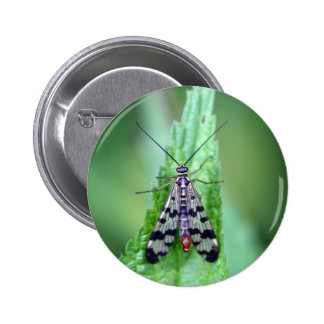 Common Scorpion Fly (Panorpa communis) Pinback Button