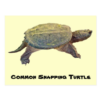 Common Snapping Turtle - Chelydra serpentina Postcard