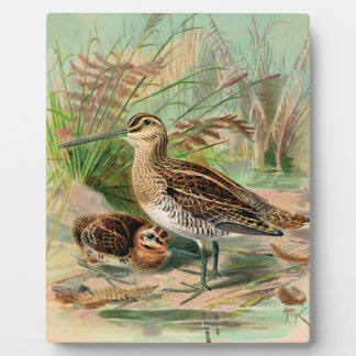 Common Snipe Vintage Bird Illustration Display Plaques