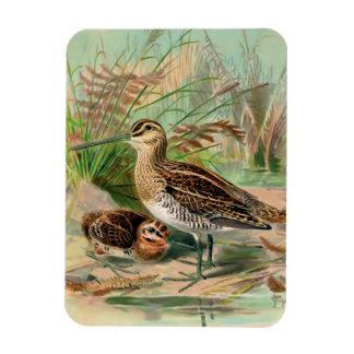 Common Snipe Vintage Bird Illustration Flexible Magnet