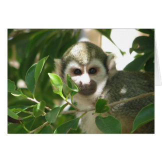 Common Squirrel Monkey Card