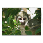 Common Squirrel Monkey Greeting Cards