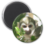 Common Squirrel Monkey Magnets
