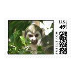 Common Squirrel Monkey Postage Stamp