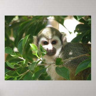 Common Squirrel Monkey Print