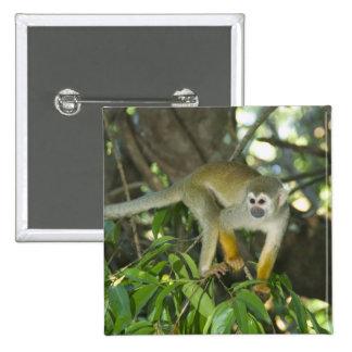 Common Squirrel Monkey, (Saimiri sciureus), Rio Pin