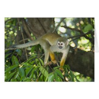 Common Squirrel Monkey, (Saimiri sciureus), Rio Greeting Cards