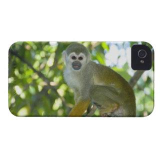Common Squirrel Monkey (Saimiri sciureus) Rio Case-Mate iPhone 4 Cases