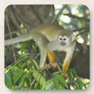 Common Squirrel Monkey, (Saimiri sciureus), Rio Beverage Coaster